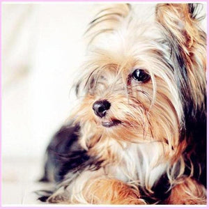 Picture Perfect Yorkie-Diamond Painting Kit-30x30cm (12x12 in)-Square-Heartful Diamonds