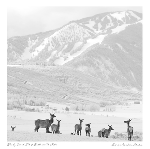 Herd of Elk in Colorado with Aspen Ski Resort Mountain