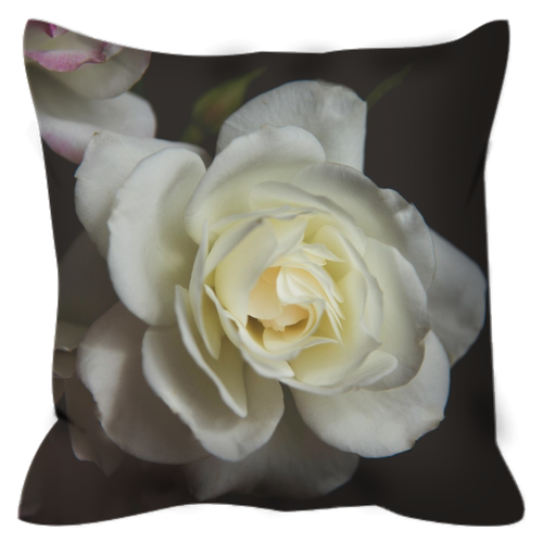 White Rose | 20x20 | Outdoor Pillow