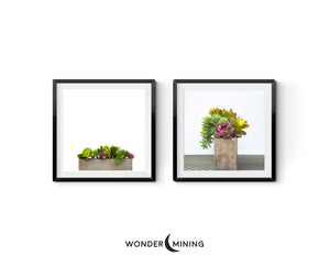 two summer succulent photographs in black modern frames