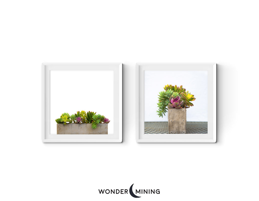 Two White Framed Images of Succulents