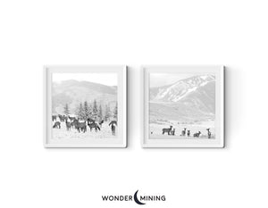 Two square photos of elk in White Frames