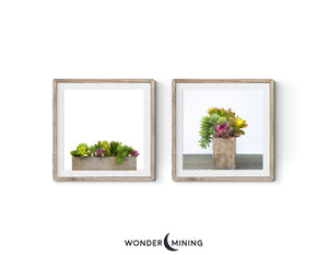 Two square images of succulents
