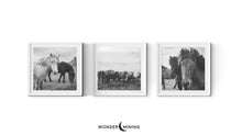 three white frames with horse pictures iceland