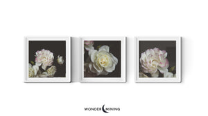 three square framed rose prints