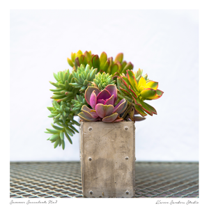 Modern Succulents on metal table