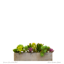 Image of succulents in concrete planter