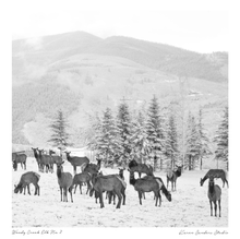 Herd of Colorado Elk in snow