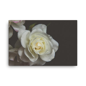 White Rose | 36x24 Canvas Print | Horizontal Wall Art