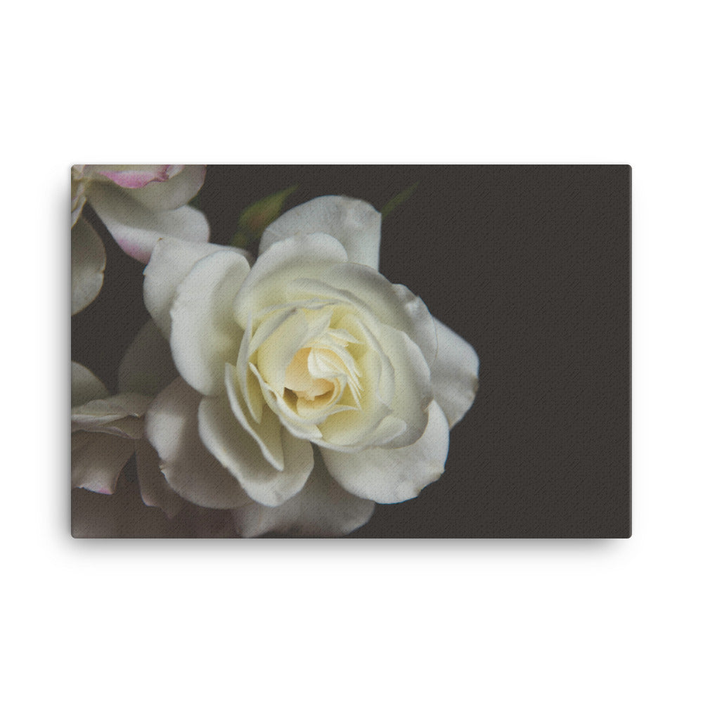 White Rose | 36x24 Canvas Print | Horizontal Wall Art ...