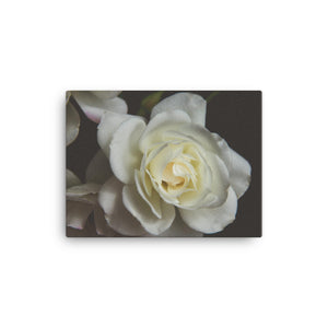 White Rose | 16x12 Canvas Print