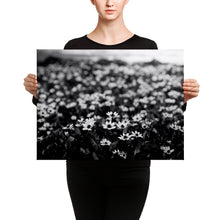 Lady holding black and white photograph of wildflowers