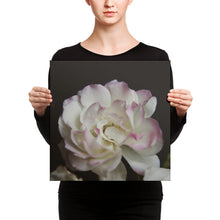 lady holding photograph of blooming white rose