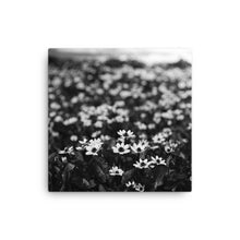 Black and white Photograph of wildflowers
