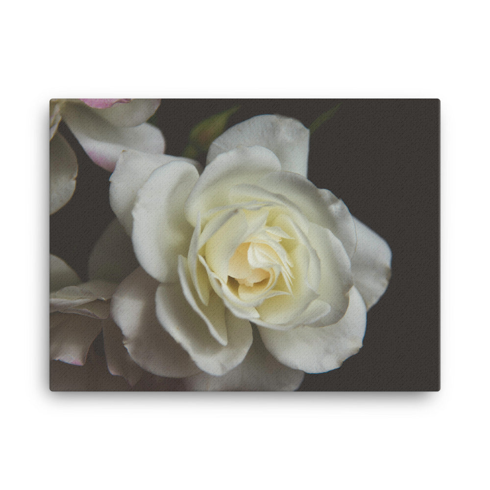 White Rose | 24x18 Canvas Print | Horizontal Wall Art