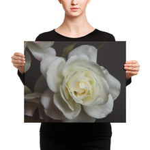 White Rose | 20x16 Canvas Print | Horizontal Wall Art
