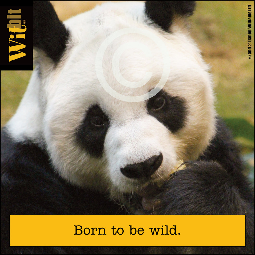 Born To Be Wild