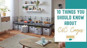 10 things you should know before buying a C&C cage for your guinea pigs