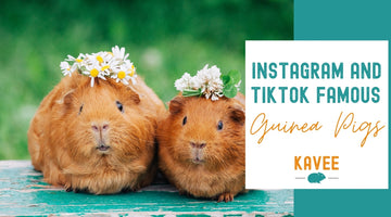 Famous Guinea Pigs of Instagram and TikTok