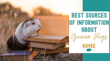Where to find the best sources of information about guinea pigs?