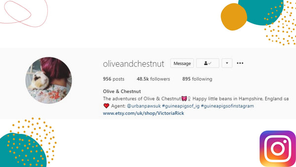 olive and chestnut guinea pigs on instagram kavee blog usa