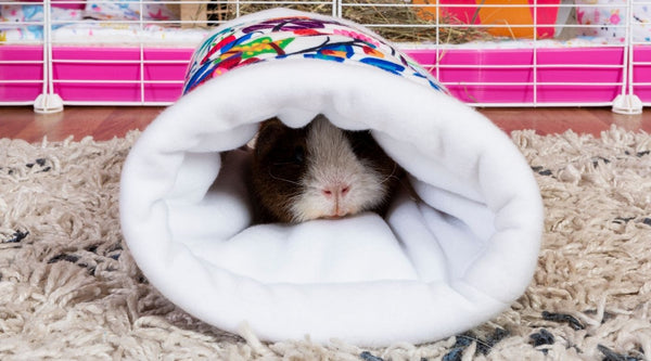 guinea pig sleeping in soft fleece tunnel accessory toy on carpet