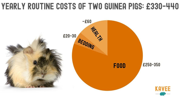 Orange Pie chart of yearly routine expenses of owning two guinea pigs