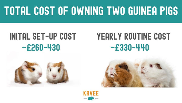 total breakdown of how much two guinea pigs can cost per year