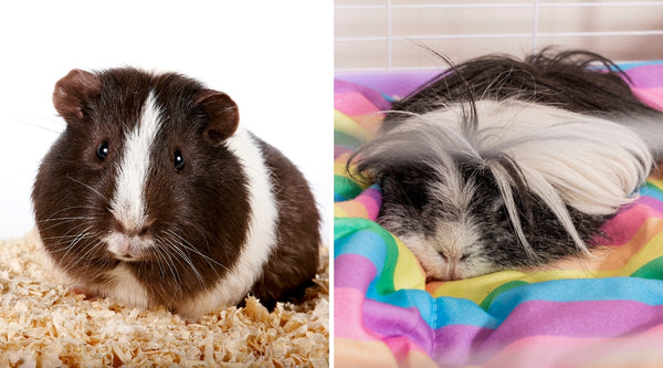 difference between types of guinea pig bedding