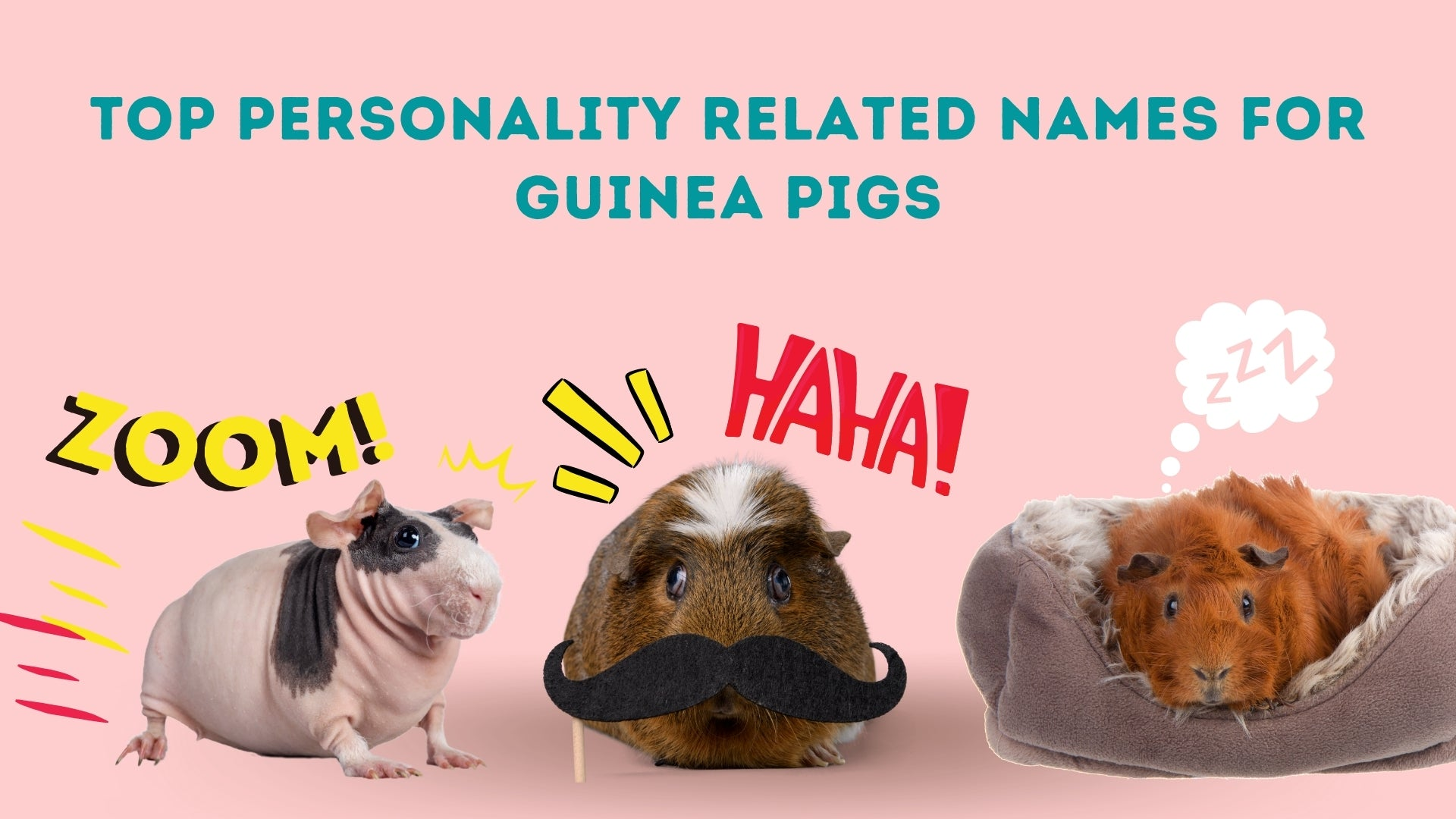 Top personality related names for guinea pigs kavee blog usa
