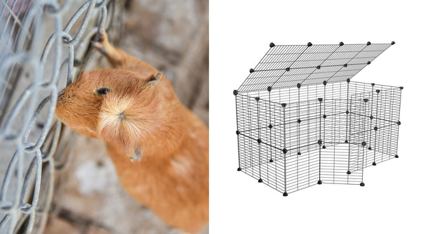 difference between outdoor guinea pig runs