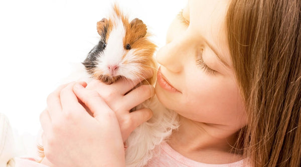 how to bond with your guinea pig