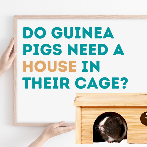 do guinea pig need a house in their cage kavee