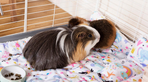 two guinea pigs cuddling on unicorn themed fleece liner in white C&C cage