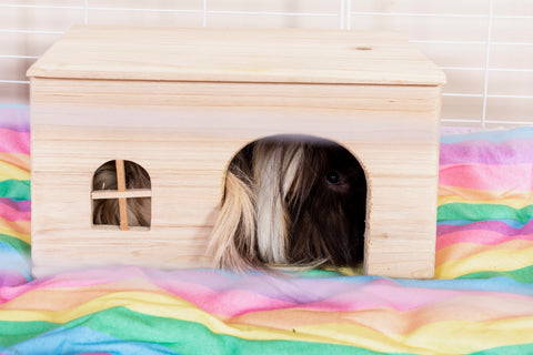 essential tip to keep your fleece liner dry clean guinea pig C&C cage kavee
