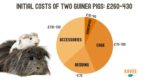Pie chart breakdown of initial costs of owning two guinea pigs