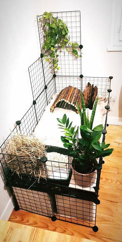 C&C cage decorated plants c and c cage guinea pig uk grid kavee