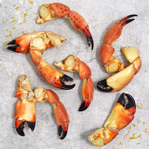 Fully Cooked Florida Stone Crab Claws - Fully Cooked Florida Stone Crab Claws
