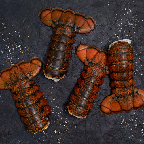 North Atlantic Lobster Tails - Seamazz 16 oz