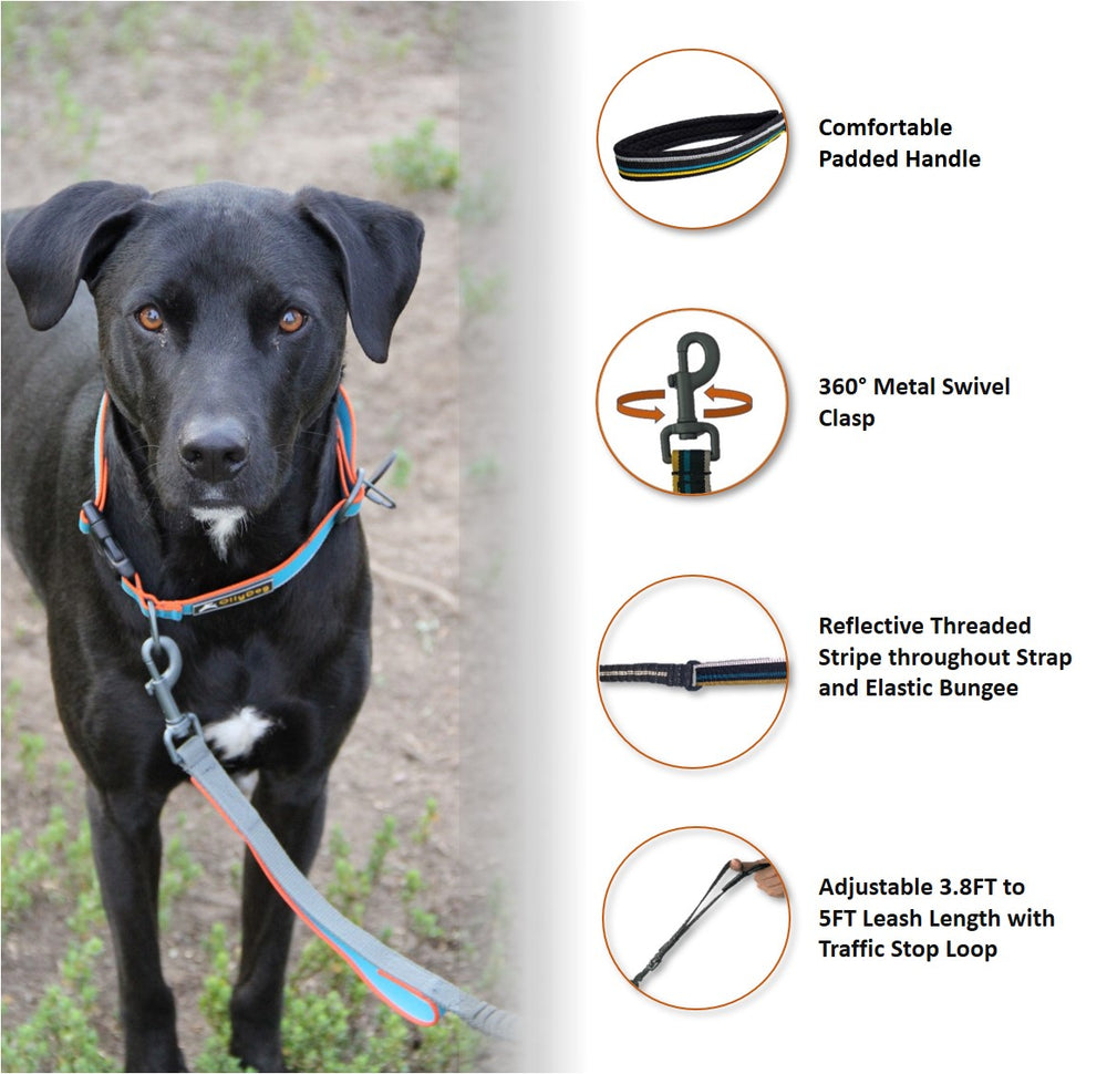 Urban Journey Reflective Spring Leash