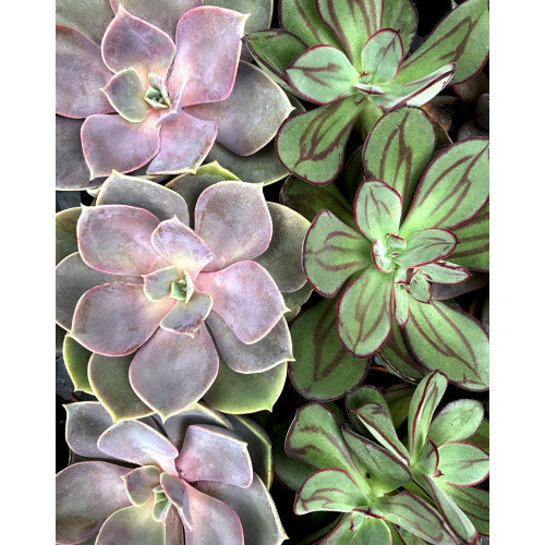 Pink Picasso Such a Succulent Paint by Number Kit - Smockingbird's