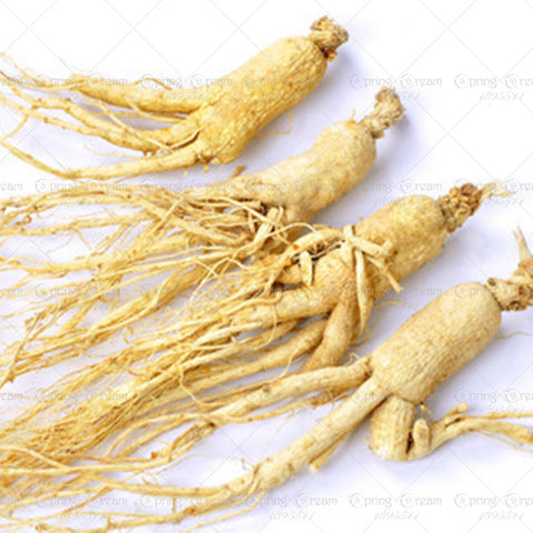 White chinese ginseng seed for health