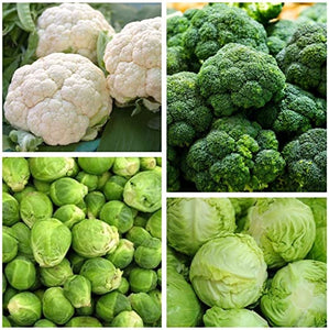 Broccoli, cauliflower and cabbages