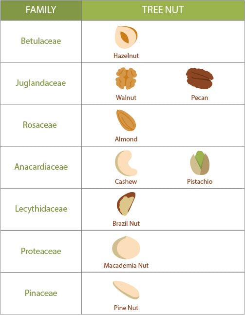 There are many types of tree nuts from pistachios to cashews