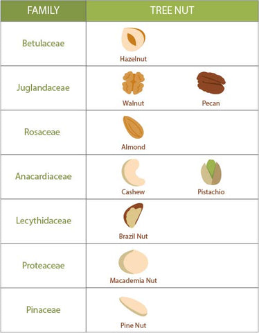 Betulaceae: hazelnuts (otherwise known as filbert nuts) Juglandaceae: walnuts and pecans Rosaceae: almonds Anacardiaceae: cashews and pistachios Lecythidaceae: brazil nuts Proteaceae: macadamia nuts Pinaceae: pine nuts
