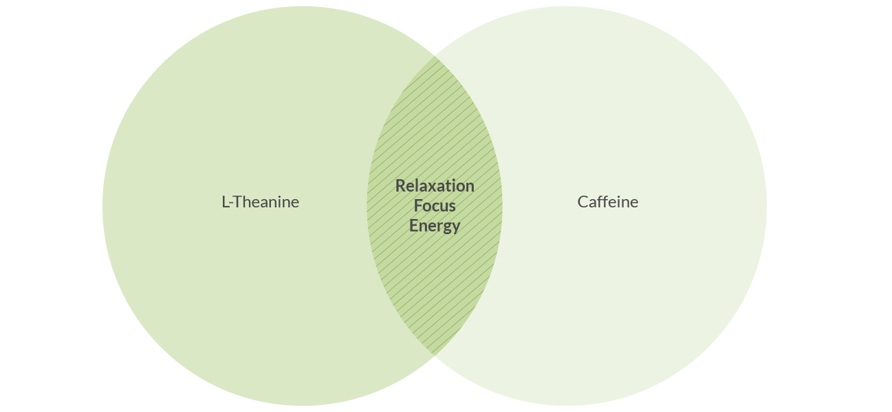 Venn Diagram showing matcha's health benefits.