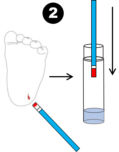 Step 2: Transfer ~one microliter of blood into the water within the Test Vial, using Blood Transfer Device.