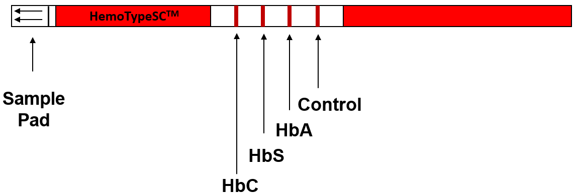 Diagram of HemoTypeSC Test Strip