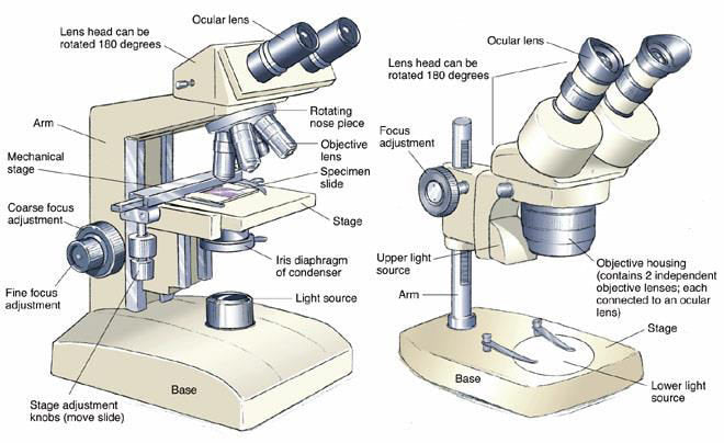 Two Main Types of Microscopes: Compound & Stereo Microscopes Explained