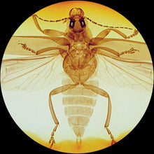 Insect under a stereo microscope.